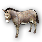 donkey_01.dds_.png