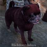 питомцы собаки в black desert online