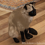 питомцы кошки в black desert online