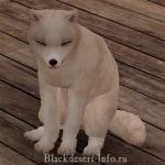 питомцы лисы в black desert online