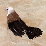 питомцы соколы в black desert online