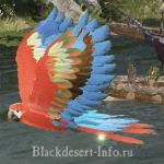 питомцы попугаи в black desert online