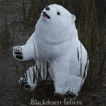 питомцы медведи в black desert online