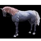 black desert лошадь 10