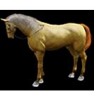 black desert лошадь 11