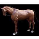 black desert лошадь 12
