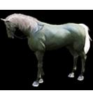 black desert лошадь 17