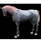 black desert лошадь 18