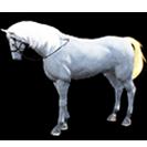 black desert лошадь 19