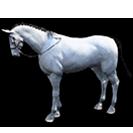 black desert лошадь 20