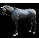 black desert лошадь 21