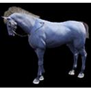 black desert лошадь 22