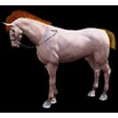 black desert лошадь 23