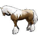 black desert лошадь 25