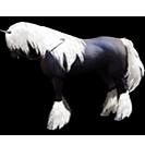 black desert лошадь 27