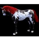 black desert лошадь 31