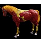 black desert лошадь 32