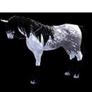 black desert лошадь 34