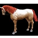 black desert лошадь 44