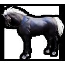 black desert лошадь 50