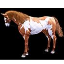 black desert лошадь 51