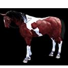 black desert лошадь 54