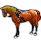 black desert лошадь 55
