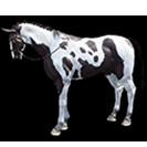 black desert лошадь 56