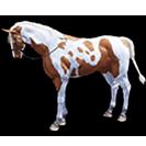 black desert лошадь 58