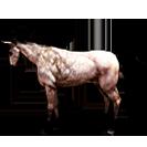black desert лошадь 60