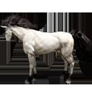 black desert лошадь 61