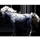 black desert лошадь 62