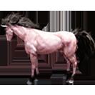 black desert лошадь 63