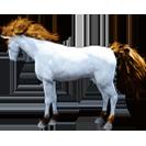 black desert лошадь 64