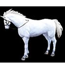 black desert лошадь 66