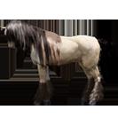 black desert лошадь 70