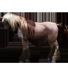 black desert лошадь 71