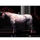 black desert лошадь 72