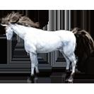 black desert лошадь 73