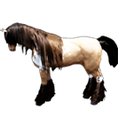 black desert лошадь 75