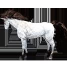 black desert лошадь 77