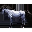 black desert лошадь 78