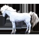black desert лошадь 79