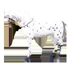 black desert лошадь №65