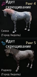 Разведение лошадей в Black Desert