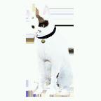 pet_cat_0092_1