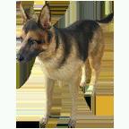 pet_dog_0002_1