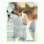 pet_dog_0067_1