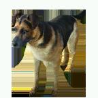 pet_dog_0075_1