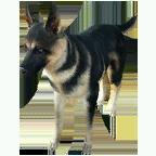 pet_dog_0076_1
